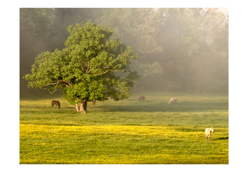 Poze Fototapet - Horses and tree