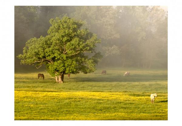 Fototapet - Horses and tree