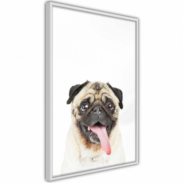 Poster - Funny Pug