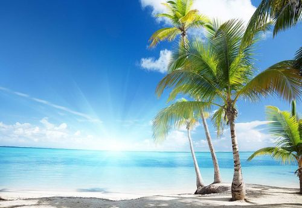 Tropical Beach Palm Trees Sea Sand Photo Wallpaper Wall Mural