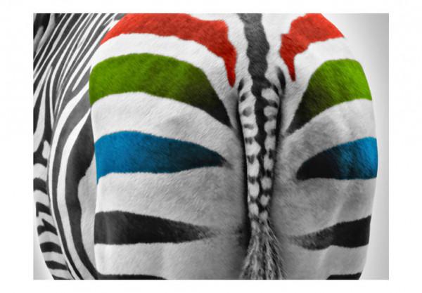 Fototapet - Colorful zebra