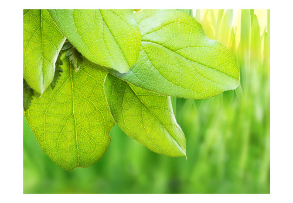 Fototapet - Green leaves - fresh