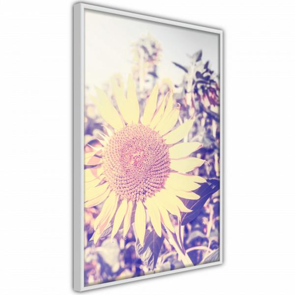 Poster - Facing the Sun