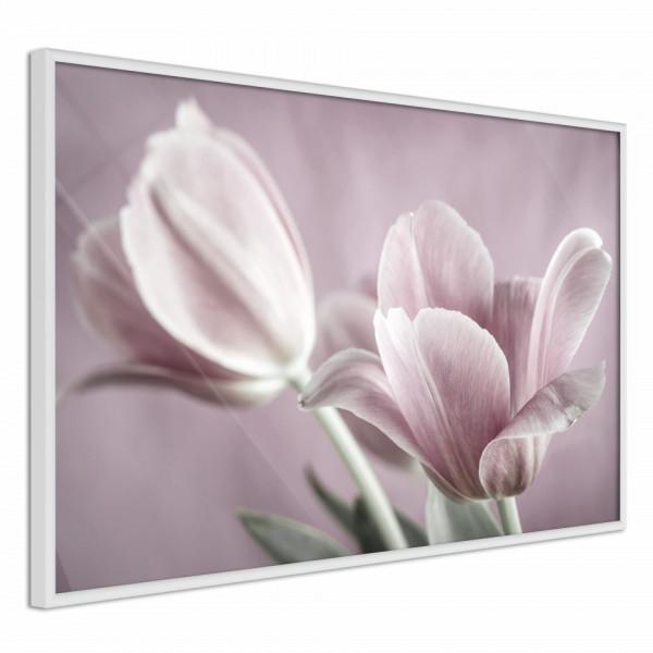 Poster - Pastel Tulips I