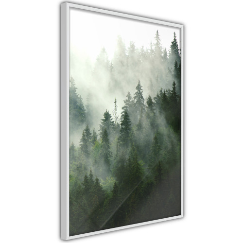 Poster - Steaming Forest