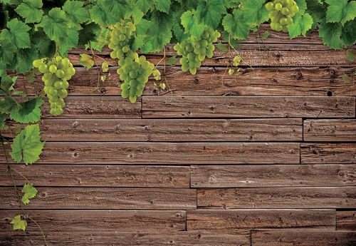 Wood Texture Grapes Vines Photo Wallpaper Wall Mural