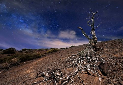 Tree In The Night Photo Wallpaper Mural
