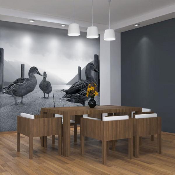 Fototapet - Ducks
