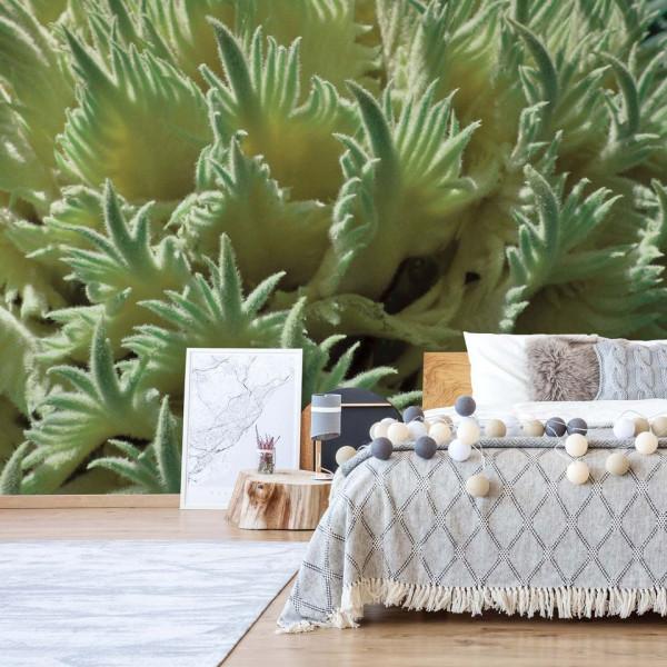 Green Organic Texture Photo Wallpaper Wall Mural