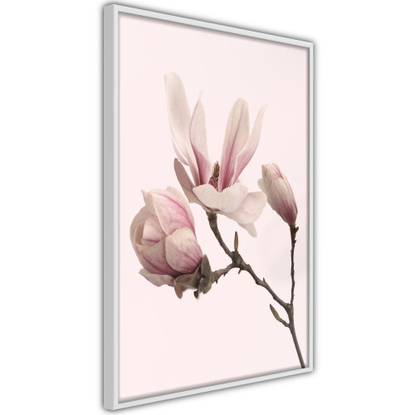 Poster - Blooming Magnolias II