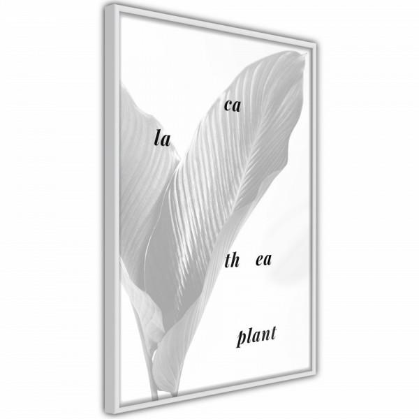 Poster - Calathea Leaves
