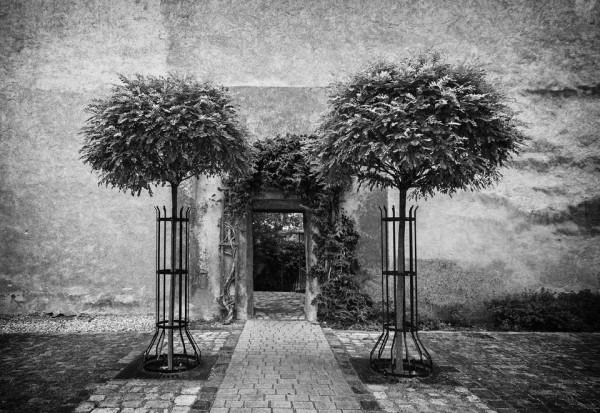 Rose Garden Entrance Photo Wallpaper Mural