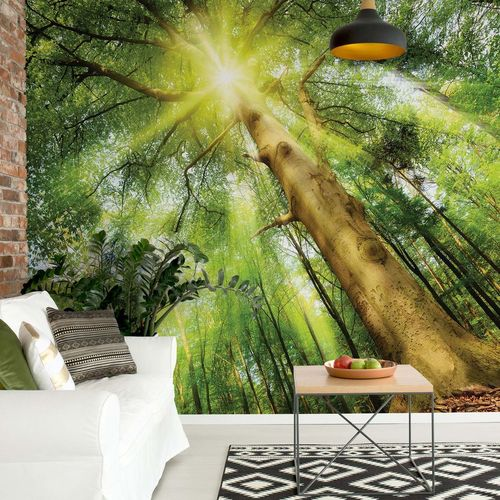 Sunshine Trees In The Forest Photo Wallpaper Wall Mural