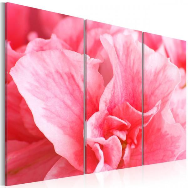 Tablou - Delicate azalia flower
