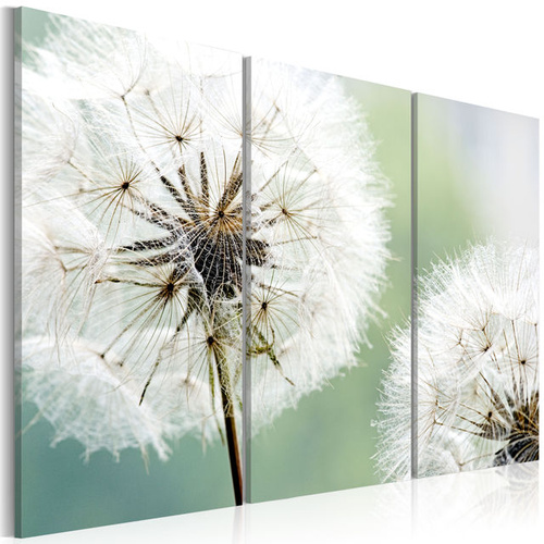 Tablou - Fluffy dandelions