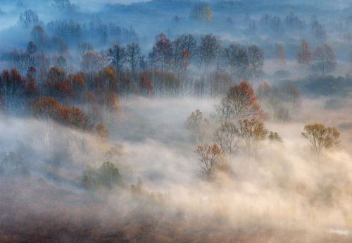 Trees In The Early Morning Fog Photo Wallpaper Mural