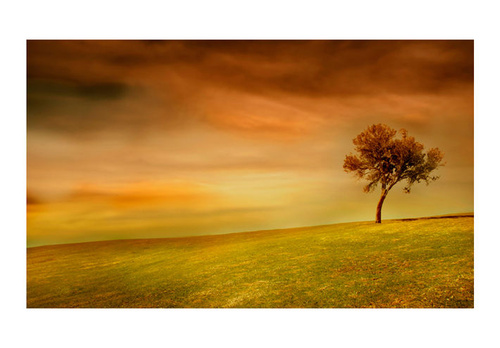 Poze Fototapet - Lonely tree
