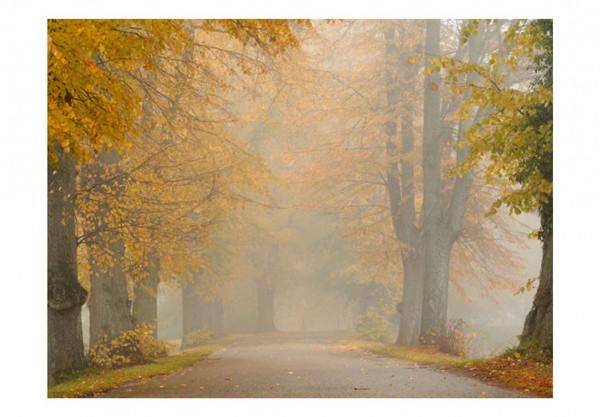 Fototapet - Trees - autumn tunnel
