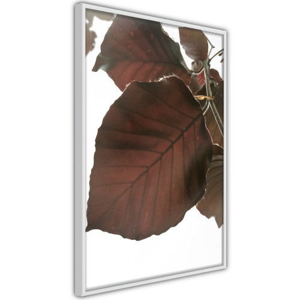 Poster - Burgundy Tilia Leaf
