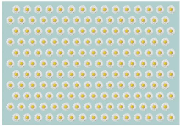 Fototapet - Dancing daisies II