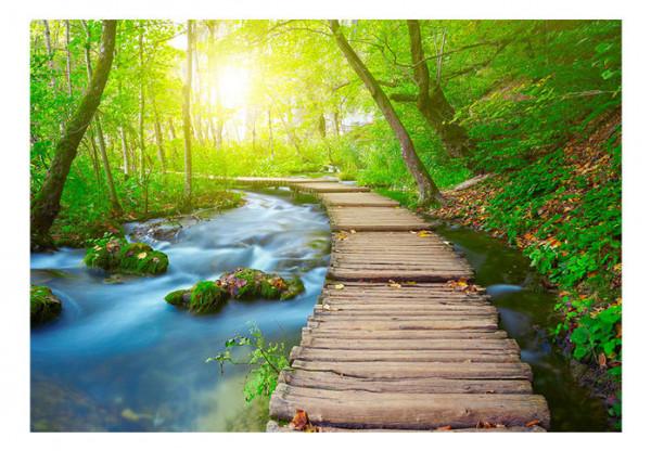 Fototapet - Green forest