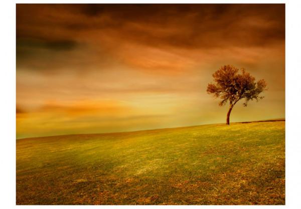 Fototapet - Lonely tree