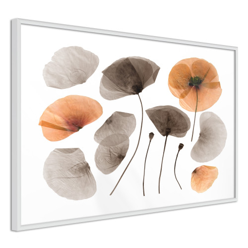 Poster - Dried Poppies