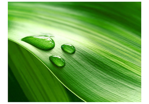 Poze Fototapet - Leaf and three drops of water