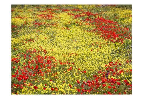 Fototapet - Meadow - red and yellow flowers