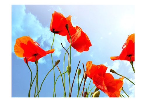 Fototapet - Poppies and blue sky