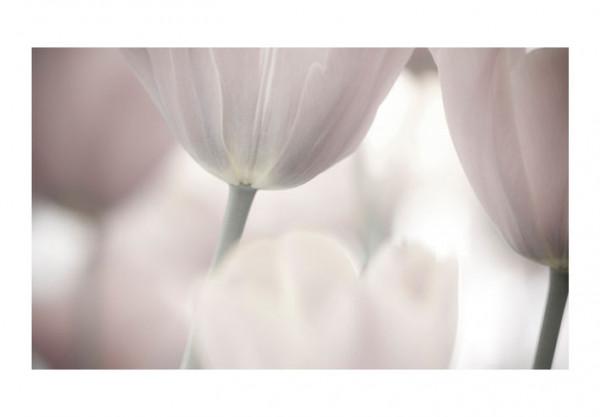 Fototapet - Tulips fine art - black and white