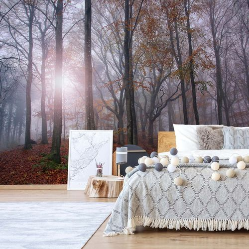 Just Forest Photo Wallpaper Mural