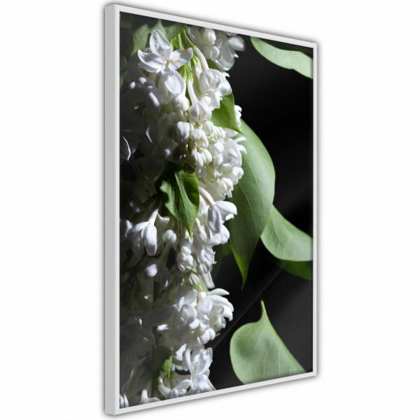 Poster - Fragrant Spring