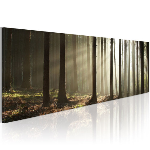 Tablou - Canvas print - Morning in the woods