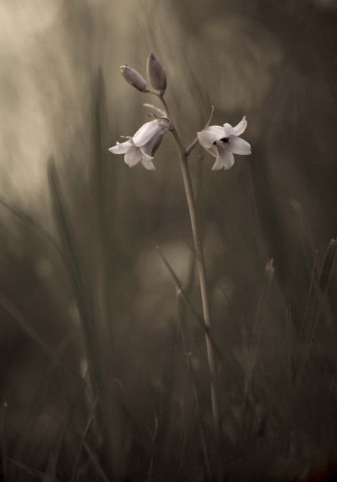 A Small Flower on the Ground by Allan Wallberg