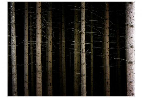Fototapet - Deep dark forest