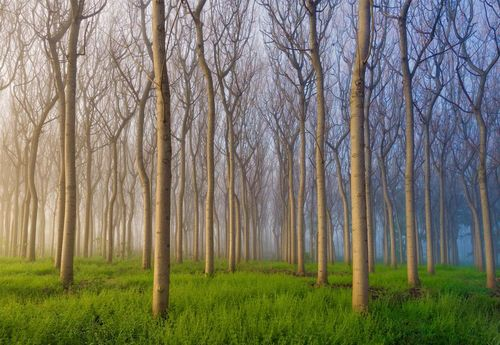 Morning Of The Forest Photo Wallpaper Mural