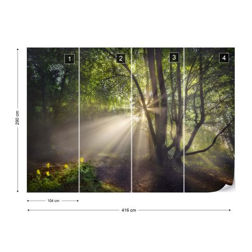 The Morning Light Photo Wallpaper Mural