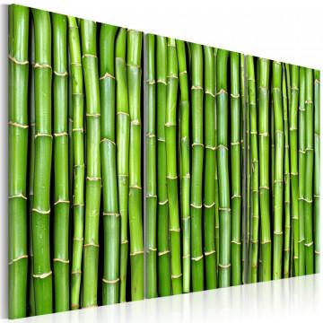 Tablou - Bamboo wall