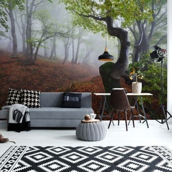 Fangorn Forest Photo Wallpaper Mural