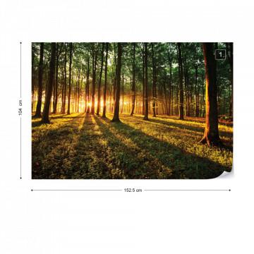 Forest Landscape Sunrise Photo Wallpaper Wall Mural