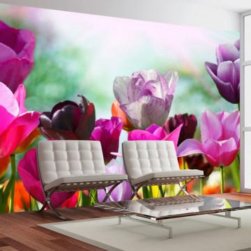 Fototapet - Beautiful spring flowers, tulips