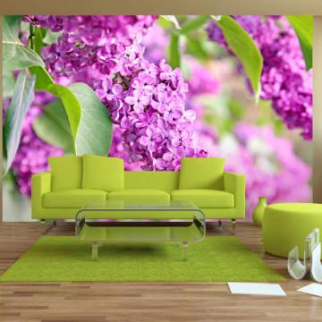 Fototapet - Lilac flowers