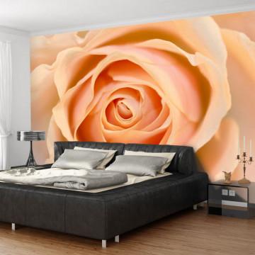 Fototapet - Peach-colored rose
