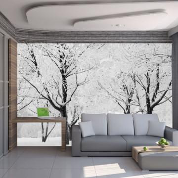 Fototapet - Trees - winter landscape