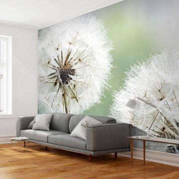 Fototapet - Two dandelions