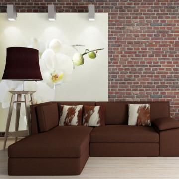 Fototapet - White orchid
