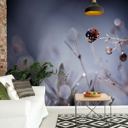 High Diving Photo Wallpaper Mural
