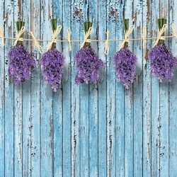 Lavender Bunches On Blue Painted Wood Plank Wall Vintage Style Photo Wallpaper Wall Mural