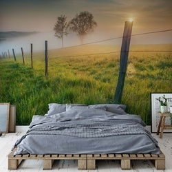 Morning Sun Photo Wallpaper Mural